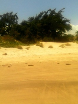 Mambrui Beach Plot for Sale, Kenya Real Estate for Sale in Malindi