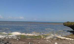 Watamu Beach Plots for sale in Kenya, Beautiful Oceanfront Land for sale in Watamu