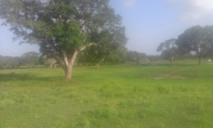 40 Acres Plot of Land in Malindi, Beautiful Land for sale in Malindi Kenya