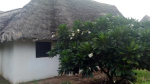 Cottages for sale in Mambrui Malindi