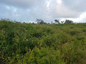 Beachfront Plot of Land for sale in Watamu